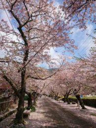 Spring in Akizuki