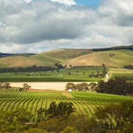 Scenery of Barossa Vineyard