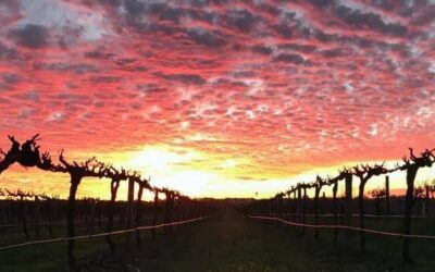 Sunset in Barossa Valley
