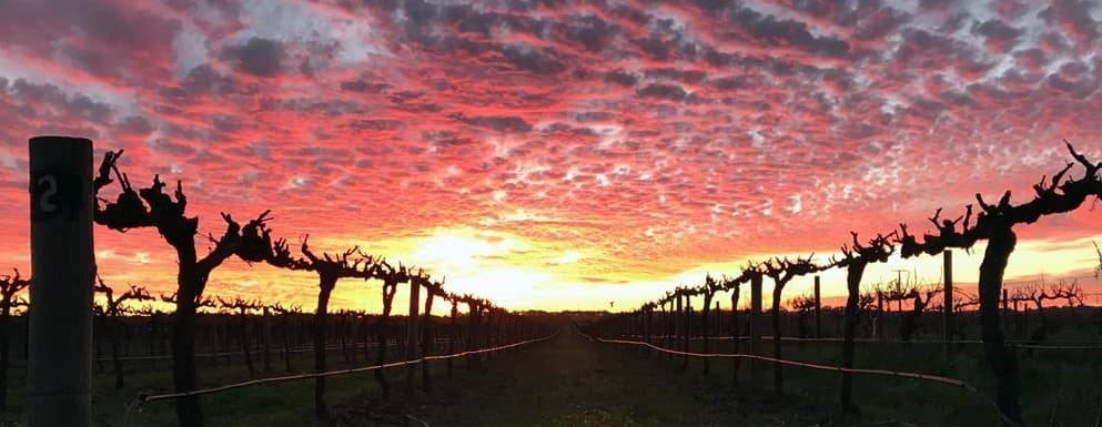 Sunset in Barossa Valley